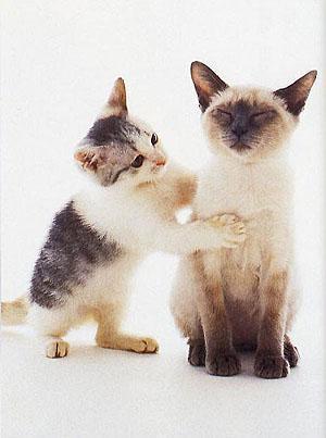 Рейки для кошек Рэйки для кошек и котов Reiki for cats