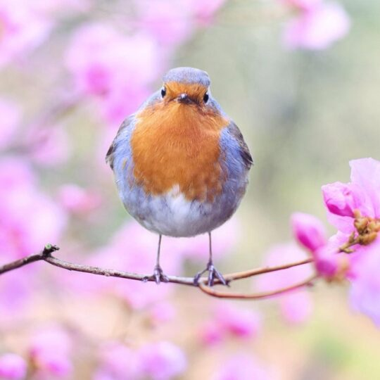Рейки Весна прекрасный период для начала практики